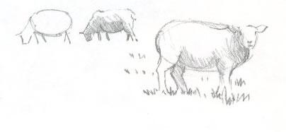 Как рисовать животное карандашом