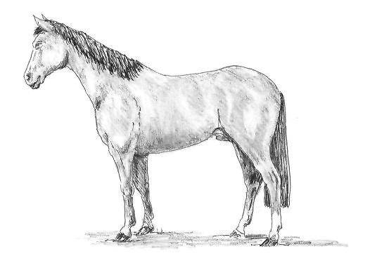 Как нарисовать лошадь – Этап 4